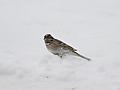 valfarter til rygge for a se sjelden fugl
